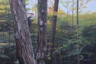 Forêt de la Yamaska-Grand Pic
